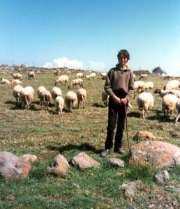 giovane pastore