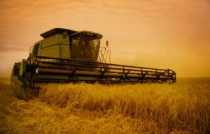 26 Oct 2004 --- Combine Harvesting Crop --- Image by © Darren Greenwood/Design Pics/Corbis